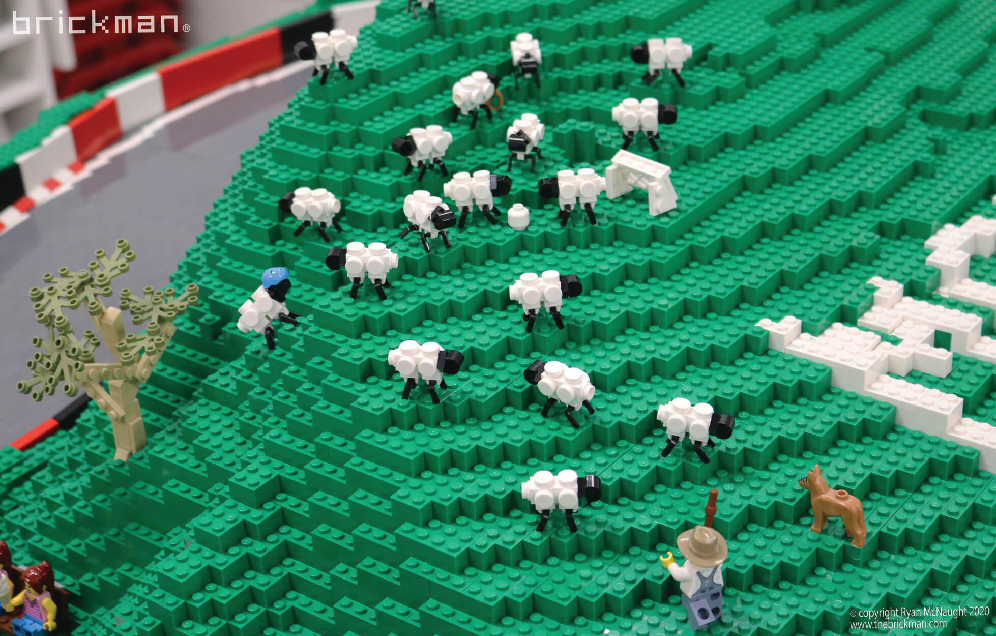 Mt Hondarama sheep